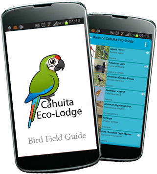 smartphone field guide jungle